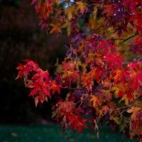 Autumn at Santa Gabriela