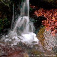 Montseny water streams