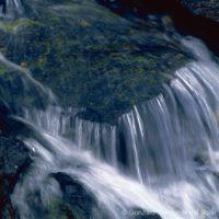 Pongo waters