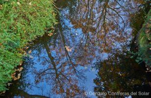 Tiergarten water mirror pond