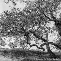Tree deformation