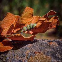 Lichen photographs
