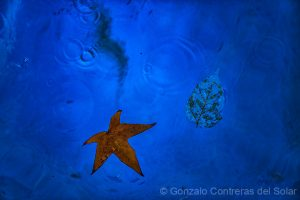 Autumn over blue